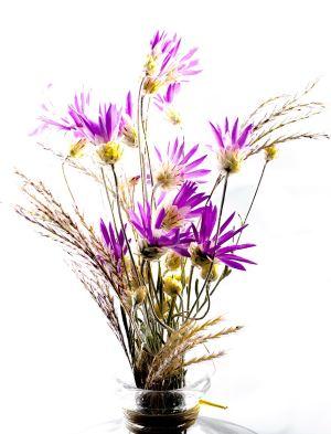 flower-202479_1280